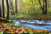 River amongst autumn trees — Stock Photo
