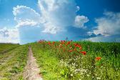 Road amongst poppies — 图库照片