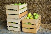 Boxes with apples — Stock Photo