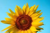 Blomma på blå bakgrund — Stockfoto
