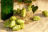 Hop and sty — Stock Photo
