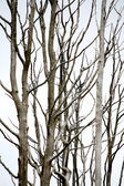 Dirty branches — Stock Photo