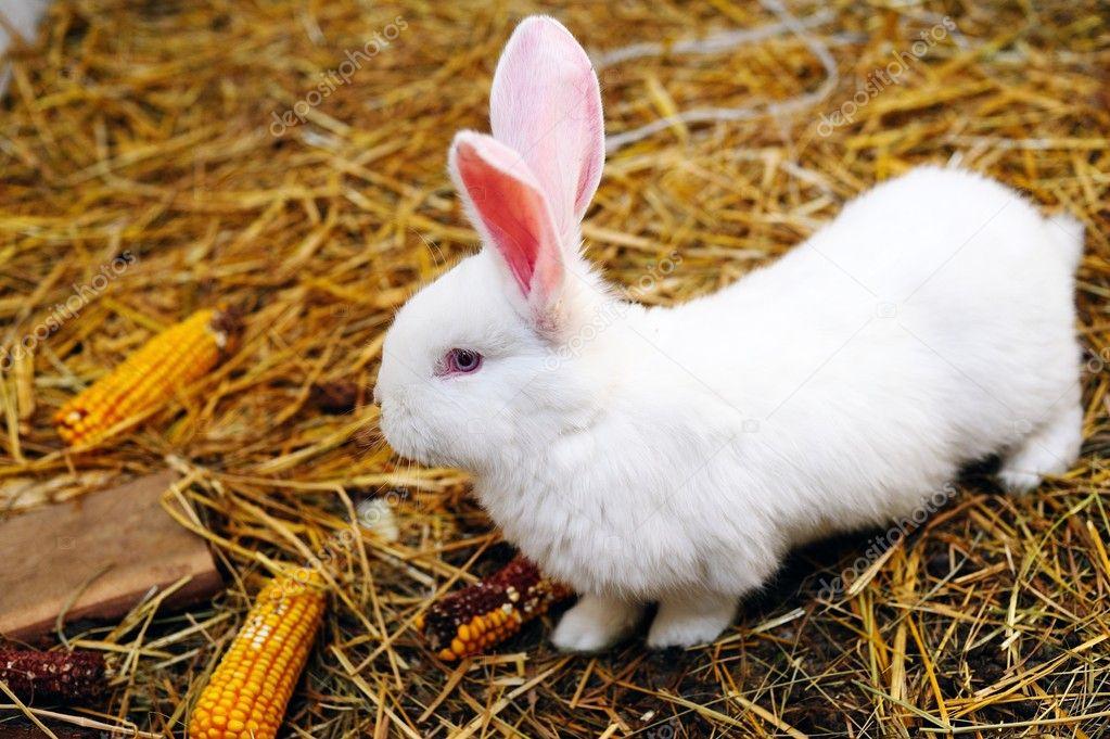 壁纸 动物 鸟 鸟类 兔子