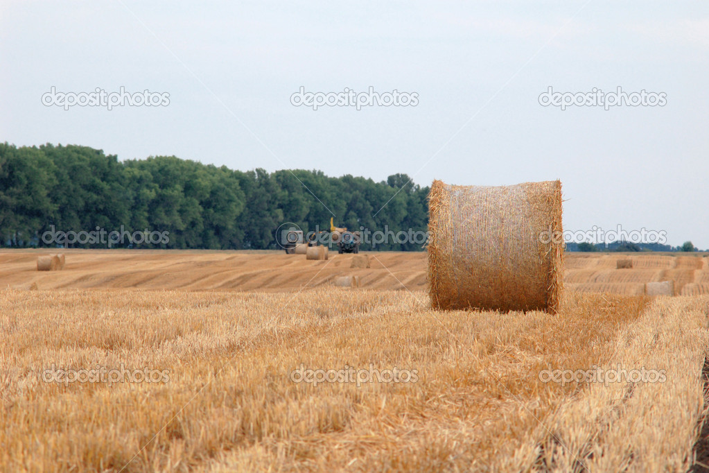 An image of roll of straw on the field — Foto de Stock   #8574885