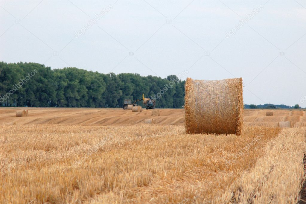 An image of roll of straw on the field  Foto Stock #8574885