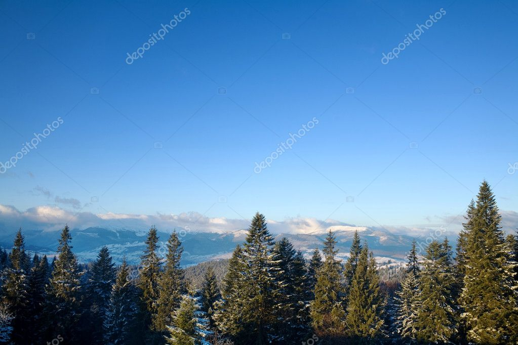 An image of  winter mountains with green furtrees  Zdjcie stockowe #8576383