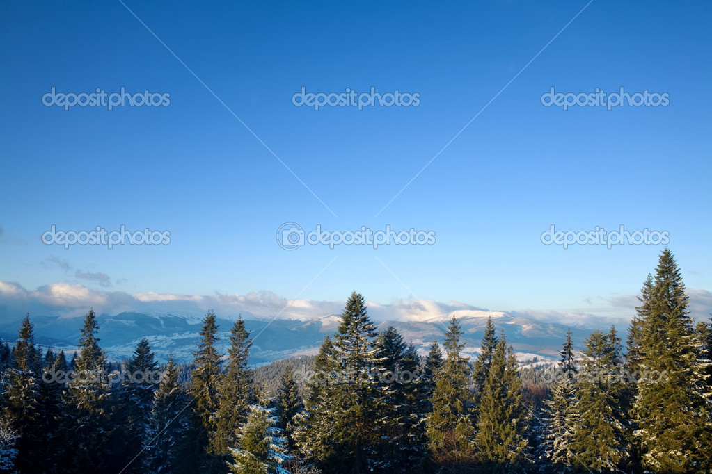 An image of  winter mountains with green furtrees  Stockfoto #8576383