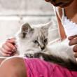 Kitten in arms — Stock Photo #8660043