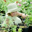 Girl in a greenhouse — Stock Photo #8664889