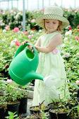 En un invernadero — Foto de Stock