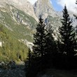 Rocky mountains and green forest — Stockfoto
