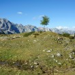 A green tree in the grey mountains — Stockfoto #9362661