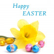 Easter card with daffodil and eggs — Stock Photo