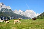 Ovejas de las cabras y los jóvenes en un potrero — Foto de Stock