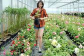 A woman working in a greenhouse — Stock Photo