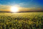 A beautiful sunset and a field — Stock Photo