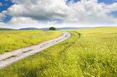 其中绿色草原路 — 图库照片