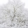 Stock Photo: White winter wood.