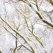Winter trees — Stockfoto #10571908