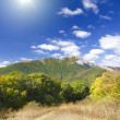 Mountain forest under blue sky. — Stock Photo