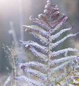 Hoar frost on the plants — Stock Photo