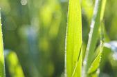 Morning grass — Stock Photo