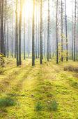 Podzimní dřevo — Stock fotografie