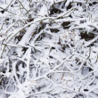 Stock Photo: Brushwood under snow