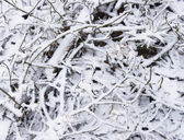 Brushwood under snow — Stock Photo