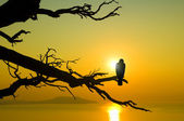 Bird on branch on sunset — Stock Photo