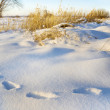 Traces on snow in the field — Stock Photo