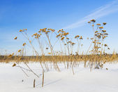 Snow-covered field — Stock Photo