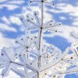Frozen plant — Stock Photo #9029537