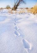 Human tracks — Stock Photo