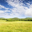 Stock Photo: Big green mountain meadow.