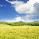 Big green mountain meadow. — Stock Photo