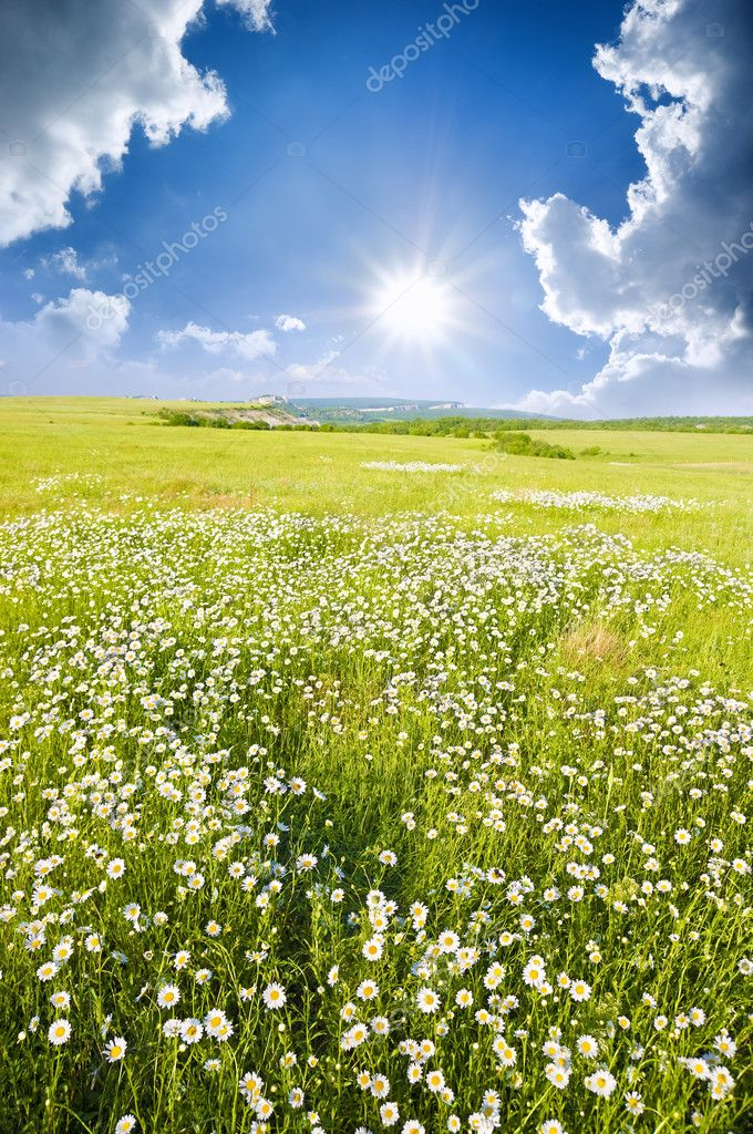 Big field of flowers on sunrise. Composition of nature. — Stock Photo #9525742