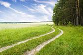 Road nära trä på en nedgång — Stockfoto
