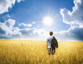 Man on yellow wheat meadow. — Stock Photo
