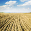 Stock Photo: Soil of agricultural field