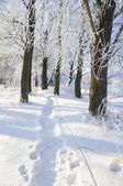 View into winter forest — Stock Photo