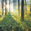 Sunset in the forest — Stock Photo #10068967