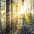 Stock Photo: Sunset in the forest