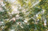 Rowan tree — Stockfoto