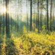 Sunset in the forest — Stock Photo #10259405