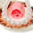 Sea shell with pearls and a rose — Stock Photo