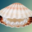 String of pearls in the sea shell — Stock Photo