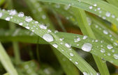 Fresh dew drops on a blade of grass — Stock Photo