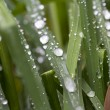 Fresh new grass after rain — Stockfoto