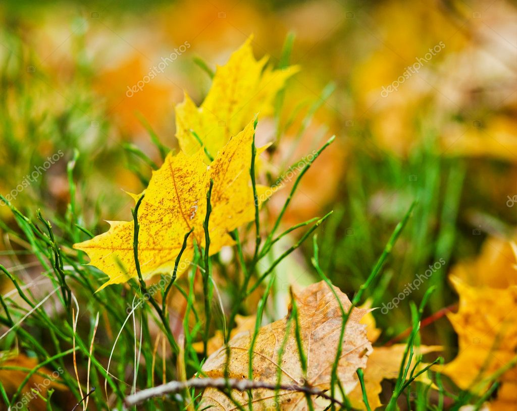 Autumn yellow leaves in grass — Stock Photo #8703305